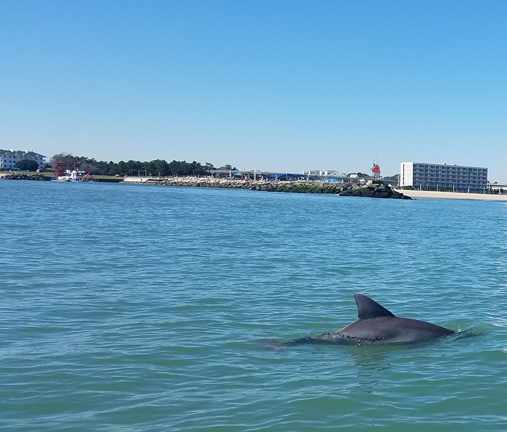schooner inn dolphin rudee inlet