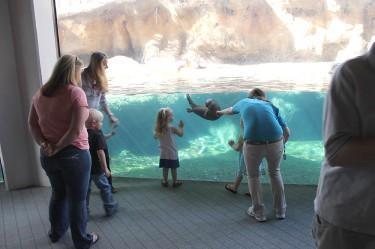 river otters virginia aquarium marine science museum