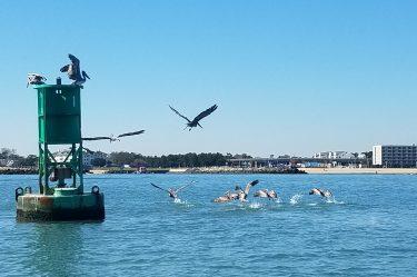 schooner inn pelicans