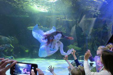 schooner inn mermaid
